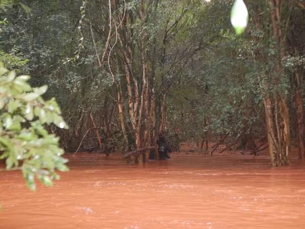Rio Reúno cheio em Nova Candelária (Foto: Antônio de Oliveira/Arquivo Pessoal)