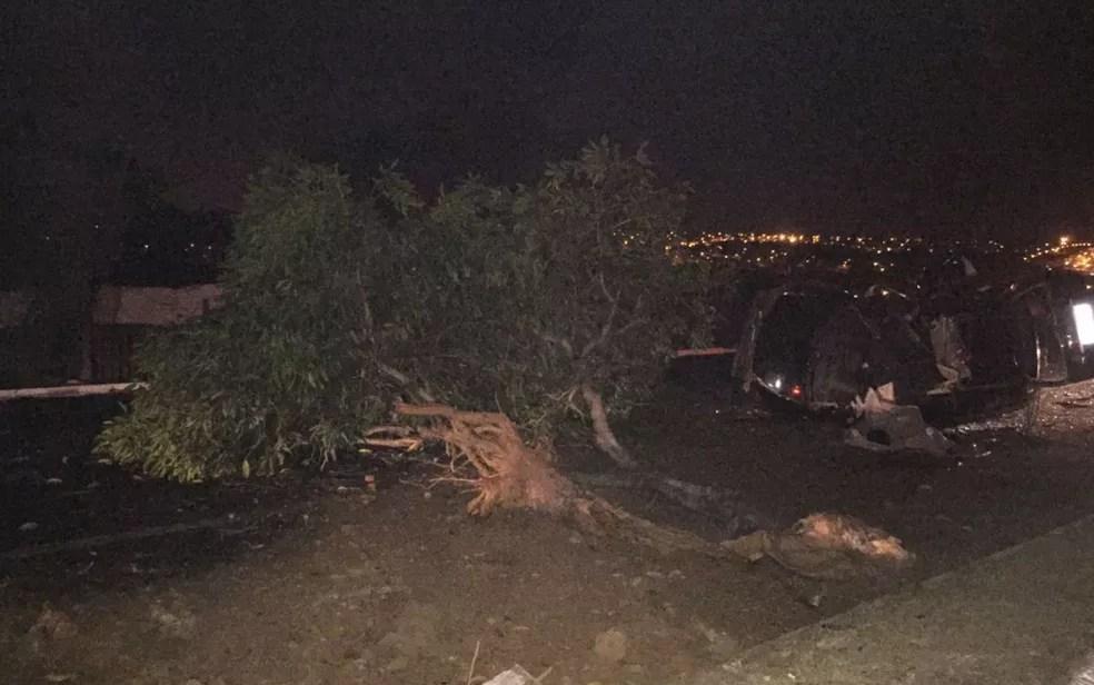 Árvore foi arrancada pelo impacto, em Goiânia, Goiás (Foto: Divulgação/Polícia Civil)