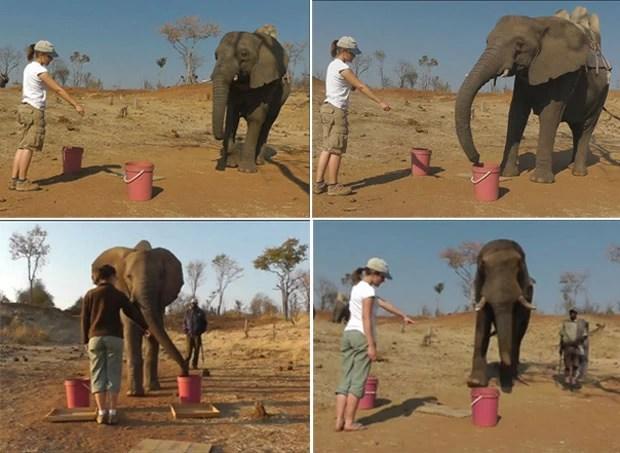 Elefantes (Foto: Reprodução/BBC)