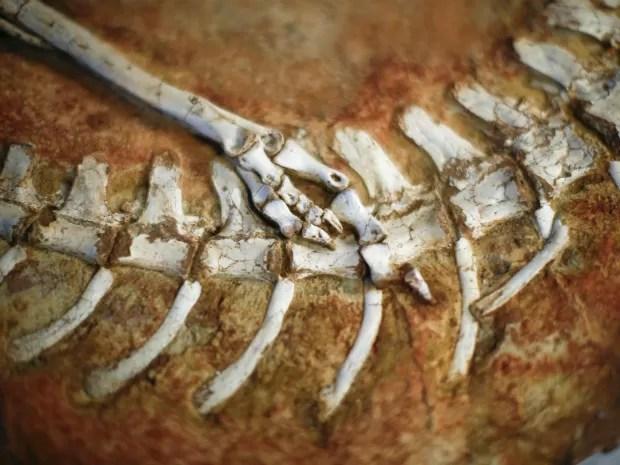 Parte de outro esqueleto de dinossauro que estavam nos Estados Unidos (Foto: Eduardo Munoz/Reuters)