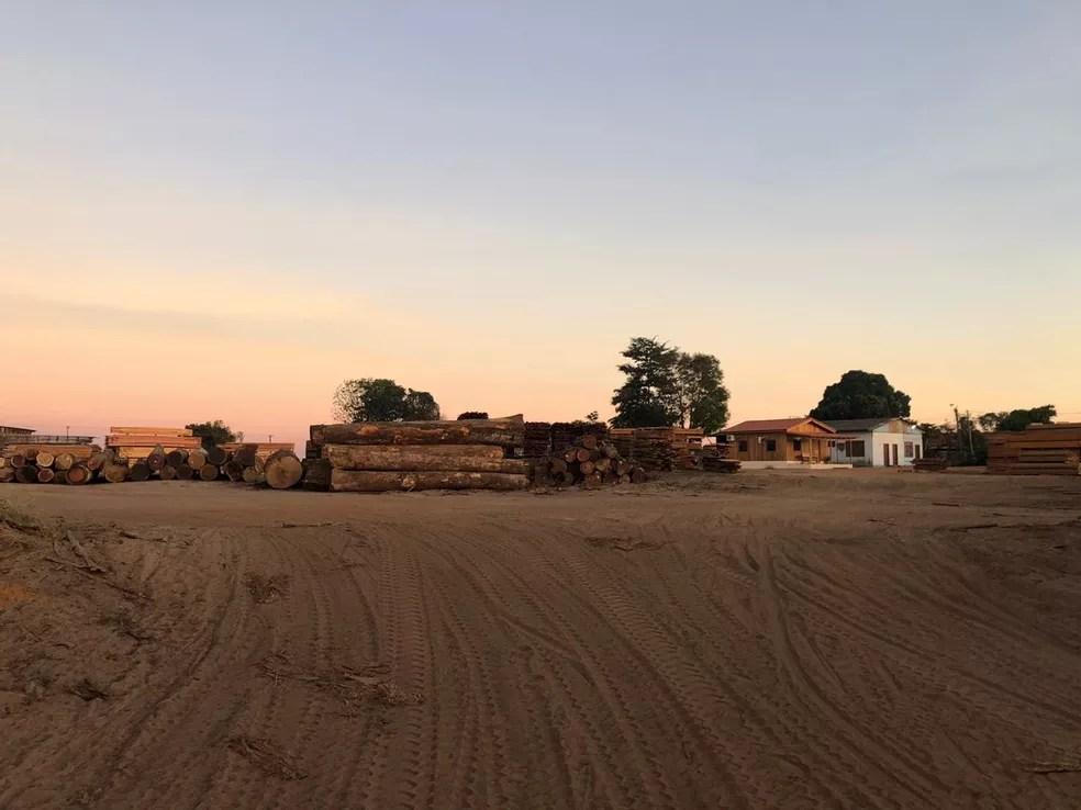 Madeiras apreendidas durante Operação Êxodo em Rondônia — Foto: PF/Divulgação