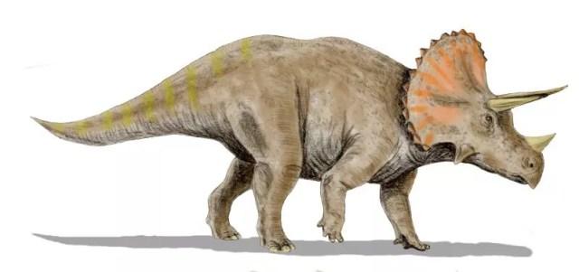 Ilustração de como era o triceratops (Foto: Wikimedia Commons)