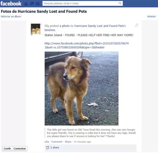 Publicação informa que animal de estimação foi encontrado após passagem de Sandy (Foto: Reprodução/Facebook)
