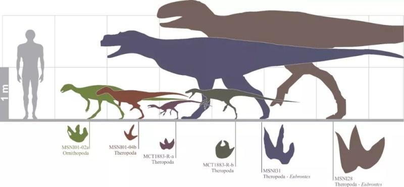 Comparação do tamanho dos dinossauros do Mato Grosso do Sul, calculado a partir das pegadas — Foto: Rafael Costa da Silva/Reprodução
