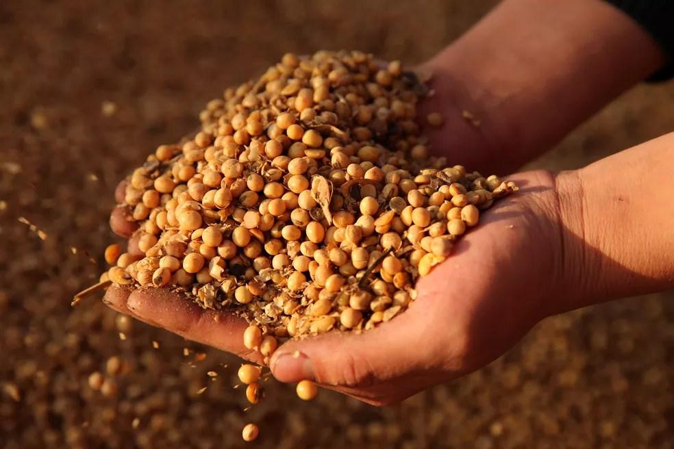 Compras anuais da empresa norueguesa representam muito pouco das exportações de soja do Brasil — Foto: Ouro Safra/Divulgação