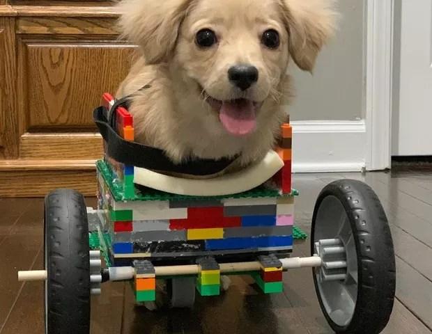 Cadeira de rodas é adaptada conforme crescimento do cachorro (Foto: Reprodução: Facebook)