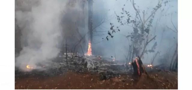 Incêndio no Bosque Municipal de Jaciara começou no domingo (29) — Foto: Reprodução