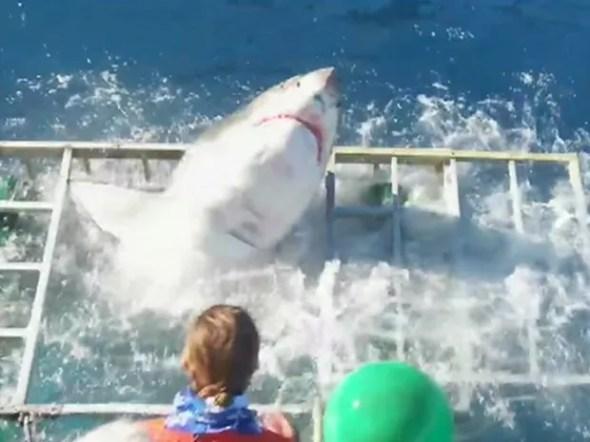 Tubarão invade gaiola de mergulhador no México (Foto: Reprodução/BBC)