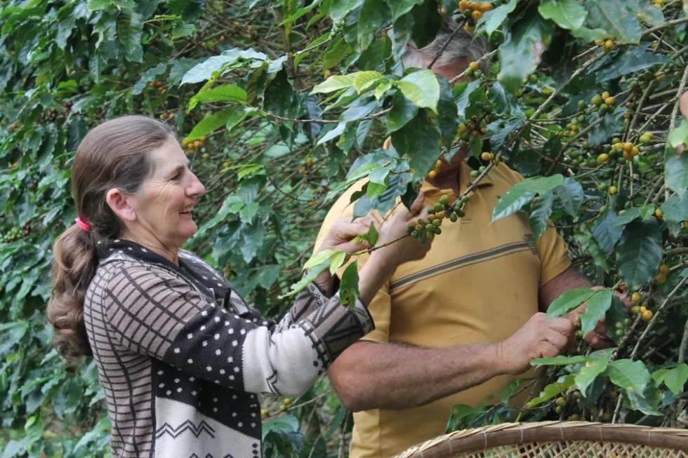 Após a família abandonar os agrotóxicos, dona Joselia nunca mais precisou tomar remédios caros — Foto: Juliana Borges/G1