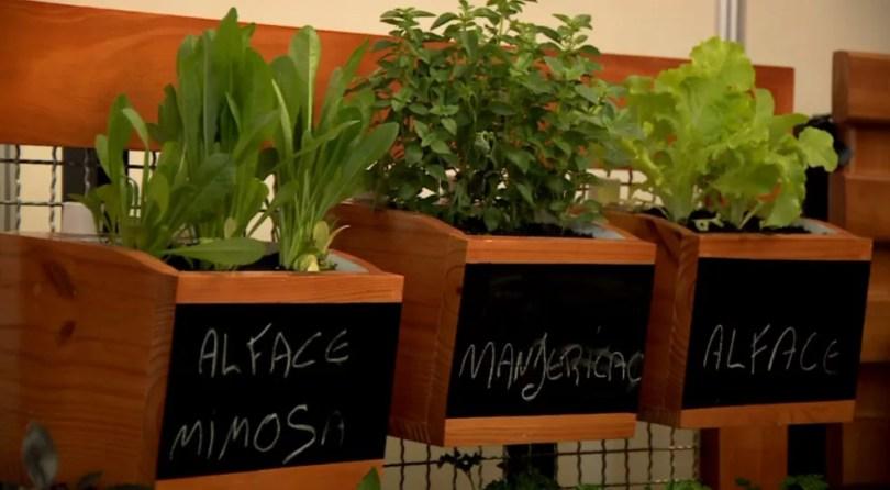 Vasos autoirrigáveis são aposta de empresários no Enflor (Foto: Reprodução/EPTV)