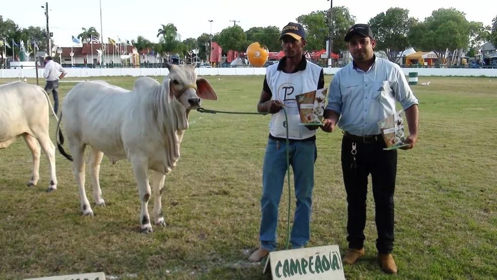 Evento promove exposição de boi vivo em Castanhal (Foto: Sindicato Rural)
