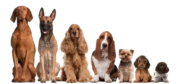 Teste: qual raça de cachorro mais combina com você? (Foto: Thinkstockphotos)