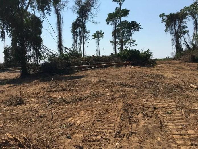 Flagrante ocorreu na zona rural de Senador Guiomard, interior do Acre — Foto: Arquivo/BPA