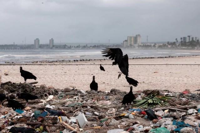 Coleta e destinação adequada de resíduos sólidos á parte do saneamento básico; na imagem, Praia da Avenida, em Maceió, recebe urubus por causa do lixo — Foto: Marcelo Brandt/G1