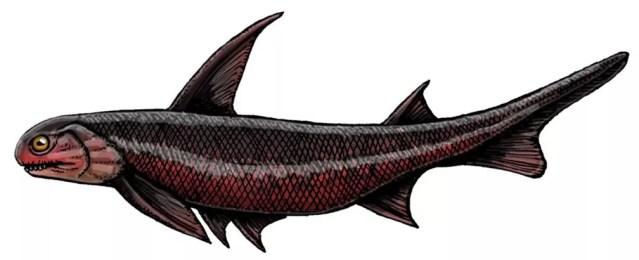 Machaeracanthus sp, um pequeno peixe, viveu há 400 milhões de anos — Foto: Felipe A. Elias/Paleozoo Brazil