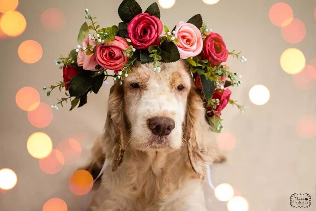 Cães portadores de deficiência que aguardam adoção foram as estrelas do trabalho final da fotógrafa Clara Medeiros (Foto: Divulgação/ Clara Medeiros)