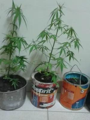 Mulher de 35 anos estaria cultivando maconha em casa (Foto: Arquivo Pessoal)
