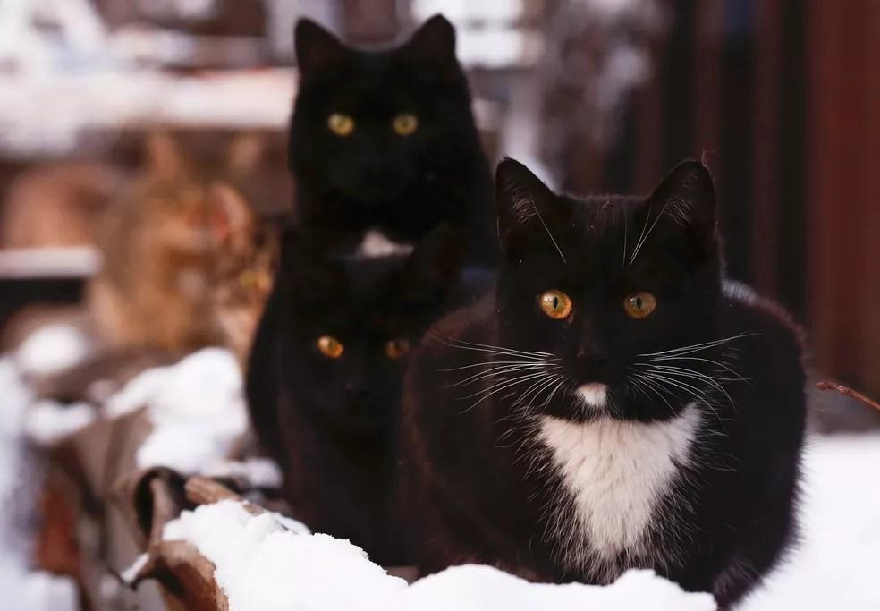 Gatos se reúnem perto de aquecedor em Moscou, na Rússia, em foto de 9 de janeiro  (Foto: Reuters/Maxim Shemetov)