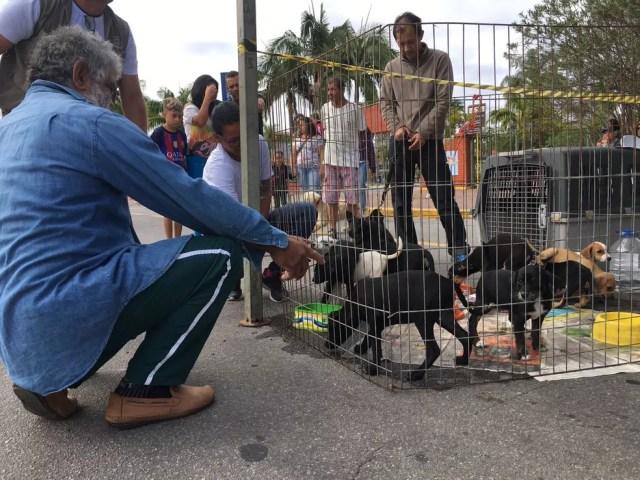 Senhor escolhendo um cãozinho para adotar na Caminhada do Amicão em Resende (Foto: Maria Clara Jordão/TV Rio Sul)