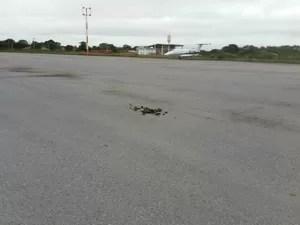 Animais deixam rastro de fezes em pista do Aeroporto de Porto Murtinho, em Mato Grosso do Sul (Foto: Edicarlos Oliveira/Arquivo Pessoal)