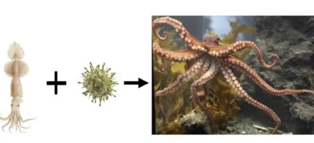 Segundo os autores do estudo, a lula deu origem ao polvo ao entrar em contato com um conjunto de bactérias extraterrestres (Foto: Reprodução)
