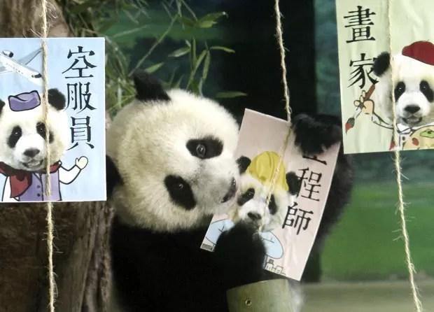 O panda Yuan Zai tambpem ganhou cartões comemorativos para seu aniversário (Foto: Chiang Ying-ying/AP)