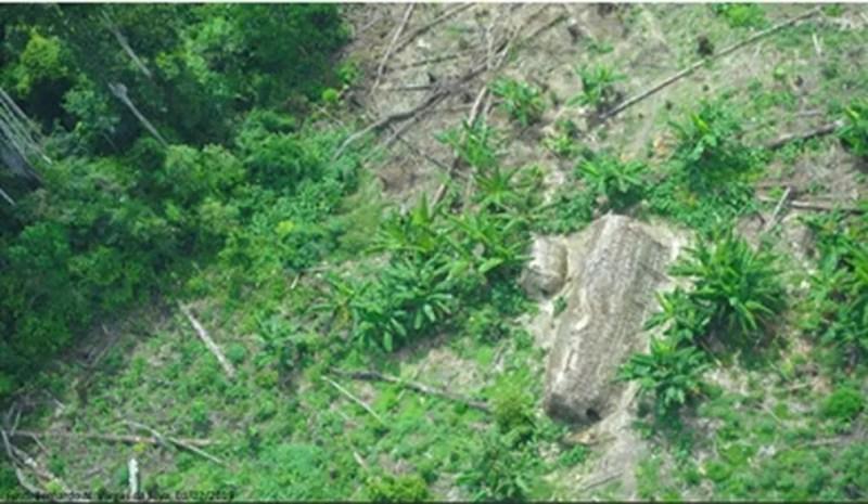Foto aérea de aldeia da tribo Korubo feita em sobrevoo de funcionários da Funai — Foto: Funai