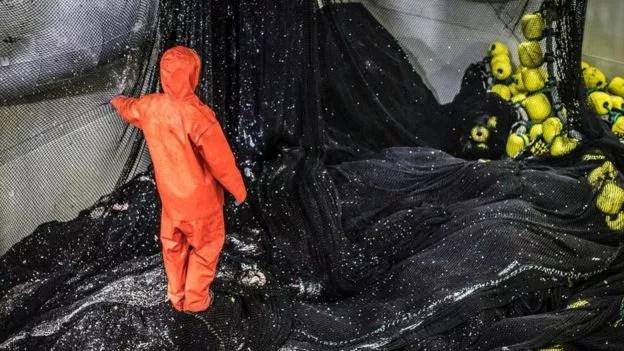 Os peixes serão georreferenciados para mostrar que são capturados longe das costas poluídas por plásticos (Foto: GETTY IMAGES/BBC News Brasil)