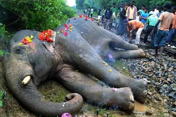 Corpo de elefante é velado na cidade de Nagaon. (Foto: AFP Photo)