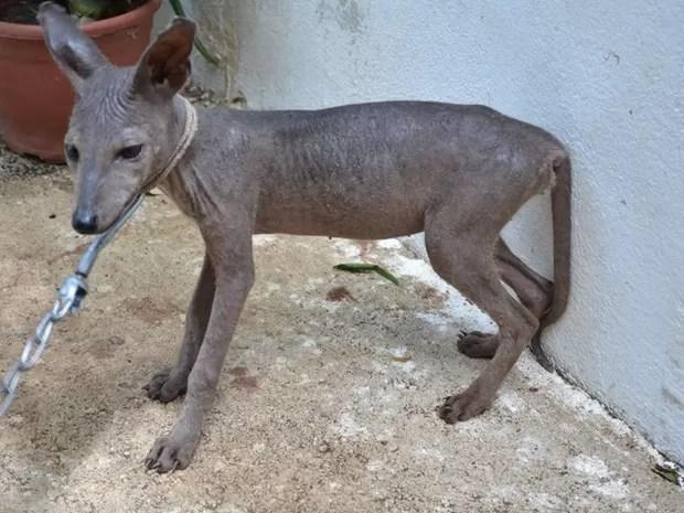 Moradores chegaram a capturar o animal e depois o soltaram (Foto: Rômulo Maia/Arquivo Pessoal)