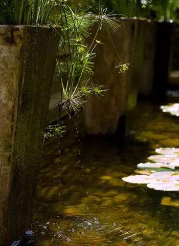 Os vasos de cimento funcionam como bicas d'água. Conforme transbordam, criam uma cascata natural que respinga nos minipapiros (Foto: Evelyn Müller)
