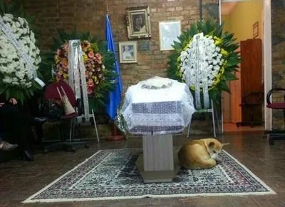 cachorro_velorio_porto_alegre (Foto: Divulgação)