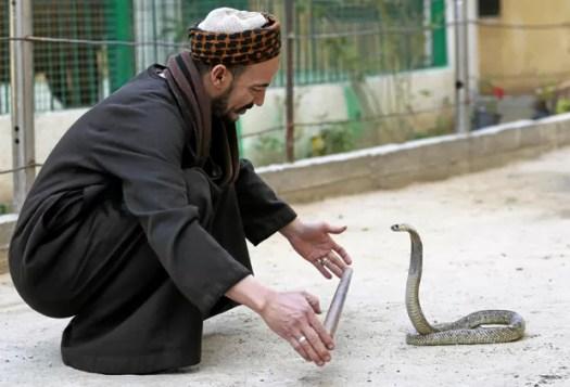 Estima-se que as cobras matem por ano cerca de 50 mil pessoas (Foto: Mohamed Abd El Ghany/Reuters)