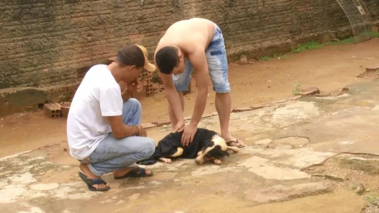 Cachorro cai em poço de 10 metros e é resgatado dois dias depois em Ariquemes — Foto: Rede Amazônica/Reprodução