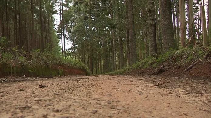 Corpo de Daniel foi encontrado em mata próxima a uma estrada rural de São José dos Pinhais — Foto: Reprodução/RPC