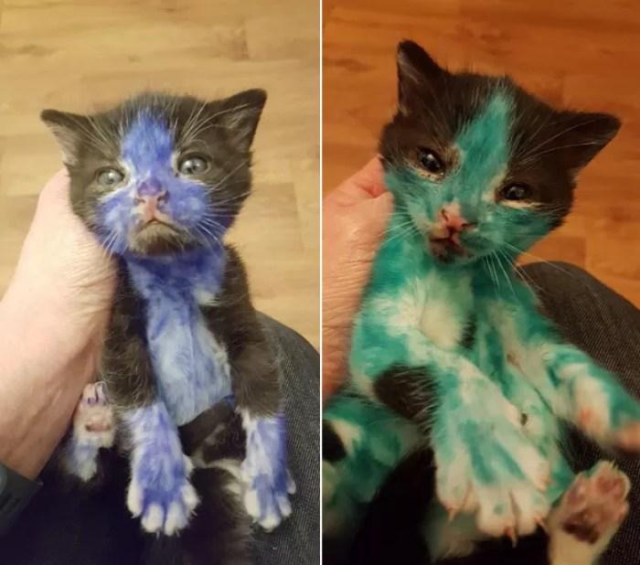 Dois gatinhos foram encontrados pintados de azul e verde na Inglaterra (Foto: Bradford Cat Watch Rescue)