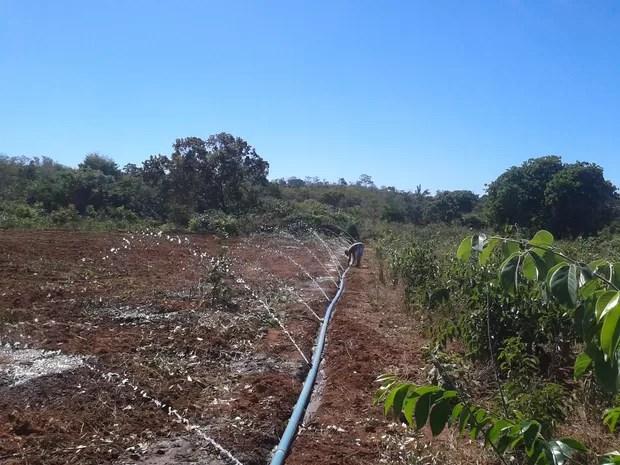 Irrigação do Projeto de Captação de Água (Foto: João Fonseca/Arquivo Pessoal)