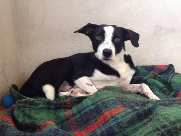 Cachorro da associação com cobertor: frio traz doenças para os animais (Foto: Arquivo Pessoal)