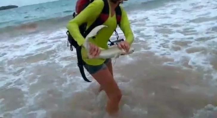 Turista tubarão