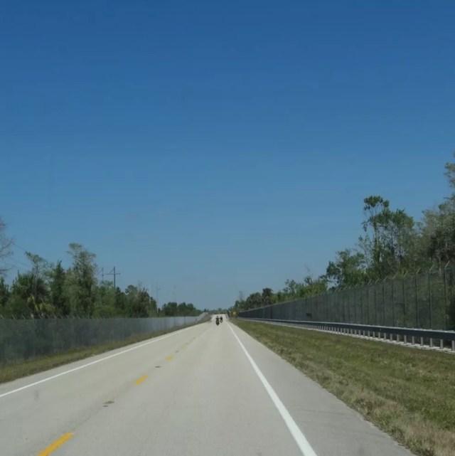 Telas de contenção instaladas em autoestrada na Flórida são exemplo de solução para rodovias com trânsito de animais silvestres no Brasil — Foto: Julio César de Souza/Arquivo pessoal