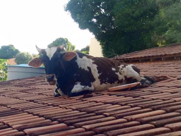 Animal caiu no telhado de uma casa e ficou preso (Foto: Divulgação Polícia Militar)