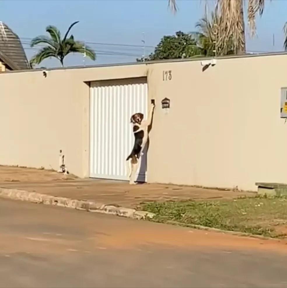 Faísca tocando a campainha para entrar em casa — Foto: Reprodução