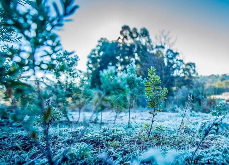 Terça-feira (18) começou gelada nos campos de Santa Rosa (Foto: Lucas Schneider/Arquivo pessoal)