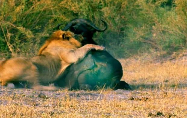 Okavango (Foto: Rede Globo)