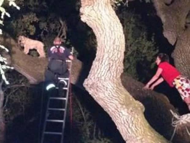 Cão foi resgatado após subir nove metros em árvore. (Foto: Reprodução)