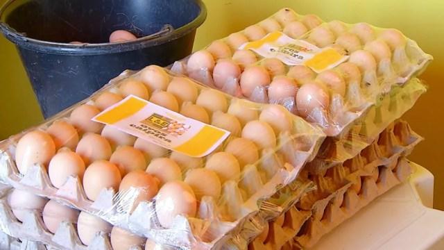 Ovos produzidos no negócio de Rodrigo — Foto: Hugo Andrade/Inter TV Costa Branca