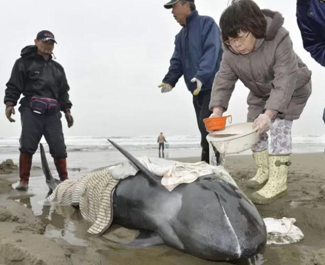 Moradores de Hokota, no Japão, tentam salvar golfinhos achados em praia nesta sexta-feira (10) (Foto: Kyodo/Reuters)