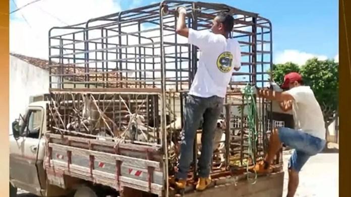 Cães foram sacrificados pela prefeitura de Igaracy, Sertão da Paraíba (Foto: Reprodução/TV Cabo Branco)