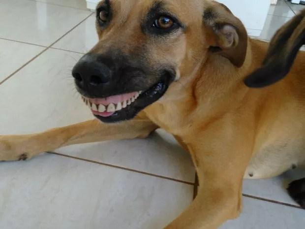 Pandora com a dentadura na boca  (Foto: Arquivo Pessoal)