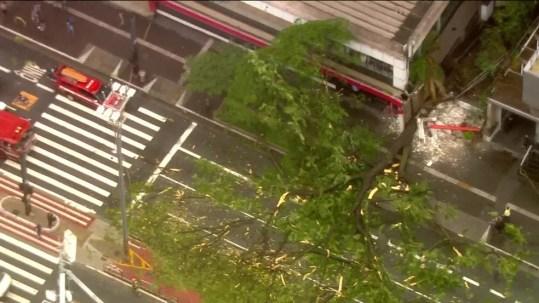 árvore cai na Avenida Paulista — Foto: Reprodução